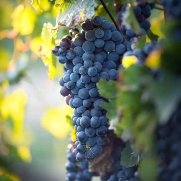 VLM_wine